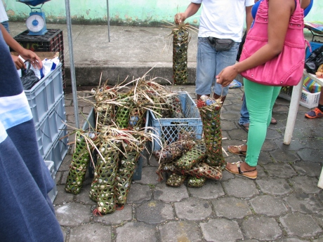 Woven grass bags filled with live crabs