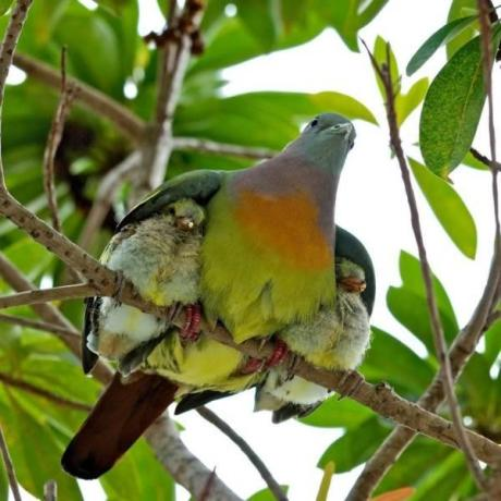 Mother's protection (1)
