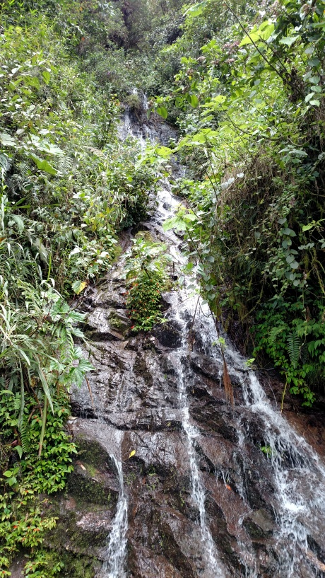 Waterfall down the mountain side beside the road to the hummingbirds